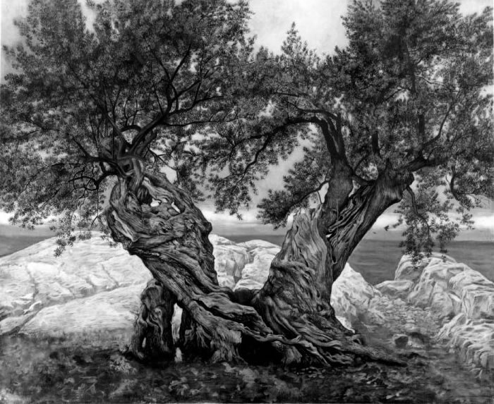 Olive-trees-twoinone-bw